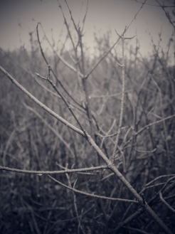 WilliamCharlesPhoto_0122